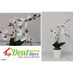 SALE Beautiful Artificial Orchid / Flower / Plant (Demo Unit)